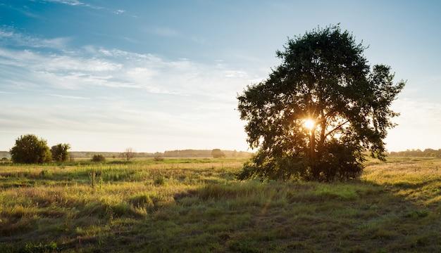 Imponujący sceeniczny widok dużego samotnego dębu w złotym zachodzie słońca