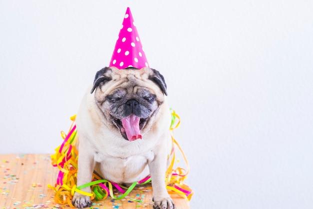 Impreza i impreza celebracja zabawy koncepcja i zmęczony zabawny mops pies z kapeluszem i konfetti, ziewając i czekając na sen