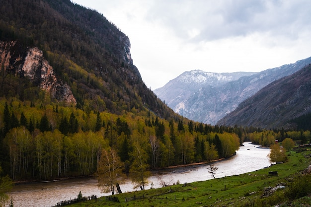 Incredible landscape valley of altai mountains with trees, hills and river