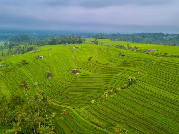 Indonezja. pola ryżowe na wyspie bali. wieczór po deszczu i zachmurzonym niebie. widok z lotu ptaka