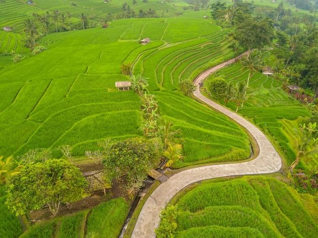 Indonezja. tarasy ryżowe na wyspie bali. wieczór. kręta ścieżka dla turystów. widok z lotu ptaka