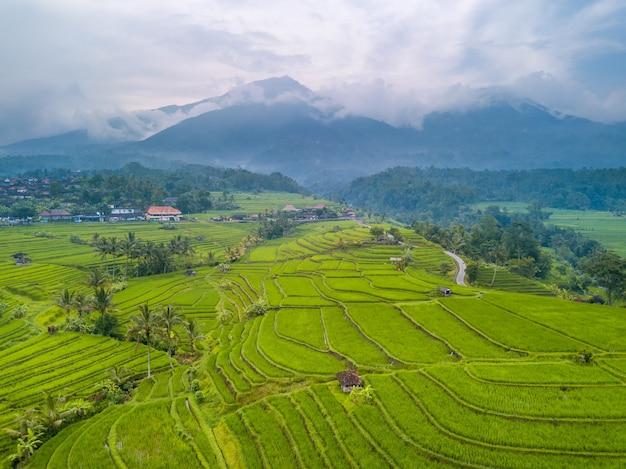 Indonezja. tarasy wielopoziomowych pól ryżowych, palm i chat. góry i dżungle w chmurach i mgle w tle. widok z lotu ptaka