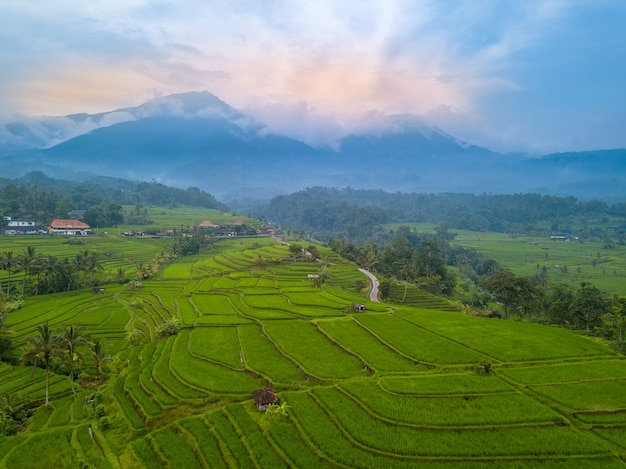 Indonezja. wyspa bali. wieczorne tarasy pól ryżowych. mgła w górach w tle. widok z lotu ptaka