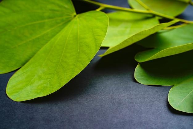Indyjski festiwal dasera, zielony liść
