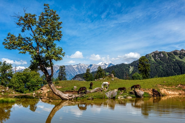 Indyjski krajobraz himalajów w himalajach