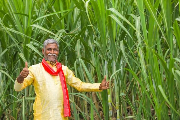 Indyjski rolnik w polu trzciny cukrowej
