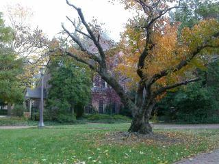 Infront drzewo domu