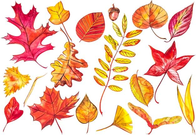 Inkasowi piękni kolorowi jesień liście odizolowywający. akwarele