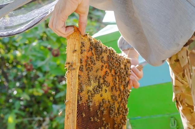 Inspekcja kolonii pszczół w pasiece wiosną