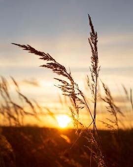 Inspirujący widok światła poranka