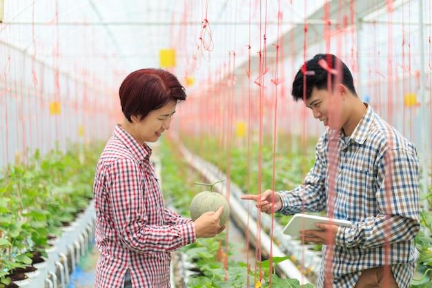Inteligentna farma, rolnik za pomocą komputera sterującego systemem rolniczym w szklarni przed zbiorami.