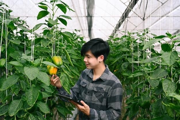 Inteligentne rolnictwo rolnictwo przy użyciu cyfrowego tabletu i sprawdzanie wzrostu papryki w szklarni.
