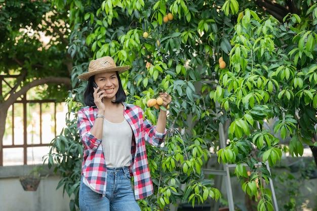Inteligentne rolnictwo z wykorzystaniem nowoczesnych technologii w rolnictwie. farmerka z cyfrowym komputerem typu tablet, telefonem w gospodarstwie śliwka mariańska za pomocą aplikacji i internetu, śliwka mariańska, mango mariana. (mayongchid po tajsku)