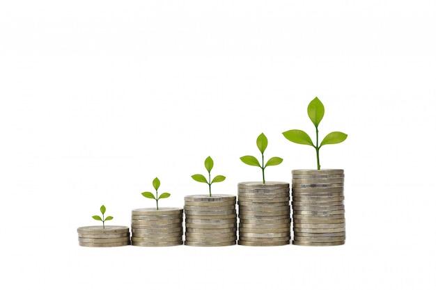 Inwestycje biznesowe i oszczędność wzrostu dla koncepcji reklamy. zasadza dorośnięcie na sztaplowanie monecie na odosobnionym i białym tła studiu, co znaczy rosnąć, oszczędzać lub zarabiać pieniądze