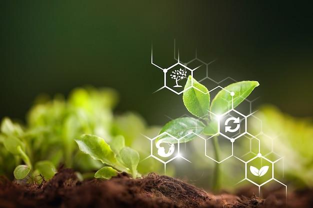 Iot, internet rzeczy, koncepcja rolnictwa,