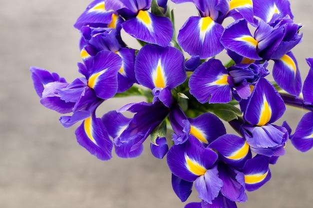 Irys kwiat zbliżenie