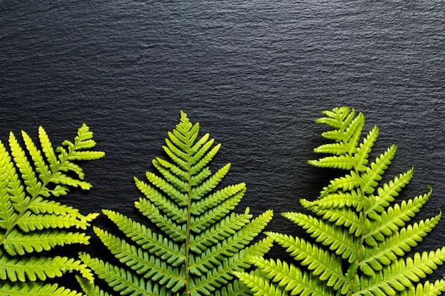 Iść zielone tło paprocie opuszczają na czarnym łupkowym kamienia tle