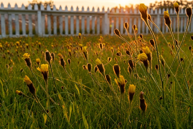 Islandia krajobraz pięknych kwiatów ogrodowych