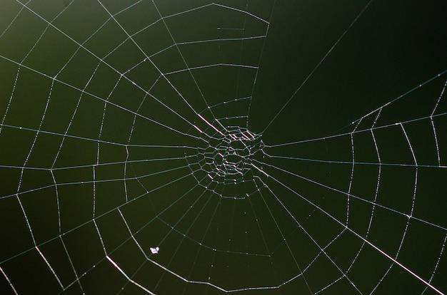 Izolat pajęczyny. brązowe tło