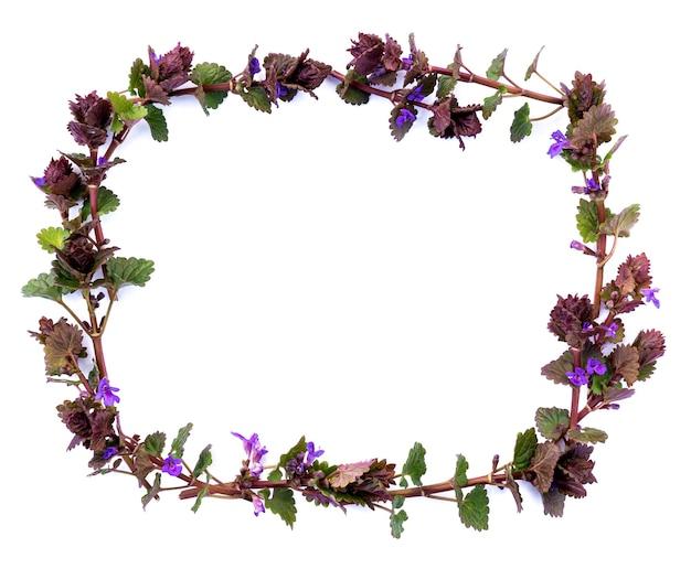 Izolowana ramka z wiosennych roślin polnych o prostokątnym kształcie fioletowych kwiatów na białym tle