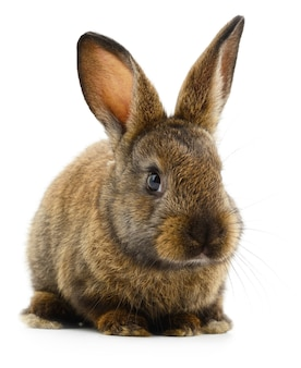 Izolowane obraz królika brązowego bunny