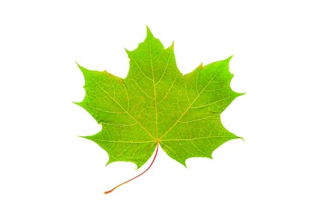 Izolowane obraz zielony liść klonu na białym tle