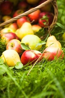 Jabłka i gruszki rozrzucone z kosza na trawie w ogrodzie