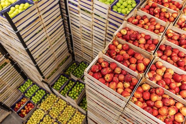 Jabłka i gruszki w skrzynkach gotowe do wysyłki. wnętrze chłodni.
