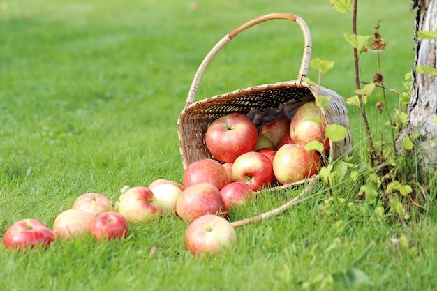 Jabłka na trawie
