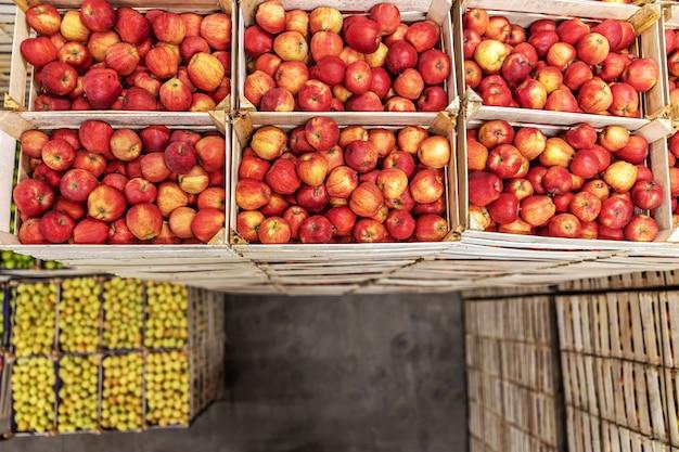 Jabłka w skrzynkach gotowe do wysyłki.