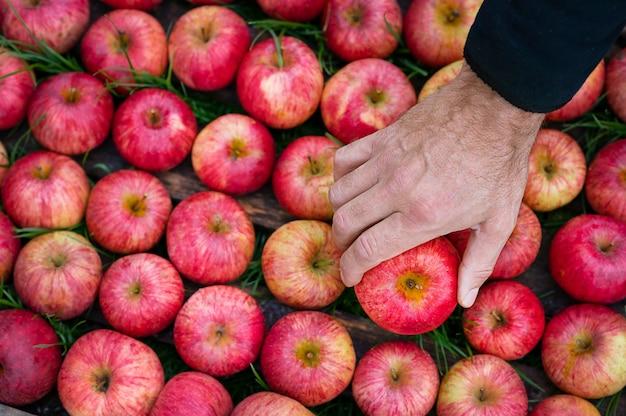 Jabłka W Starej Drewnianej Skrzynce Ramowej Dłoni Premium Zdjęcia