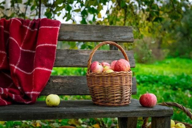 Jabłka zbierane w trzech koszach na drewnianej ławce