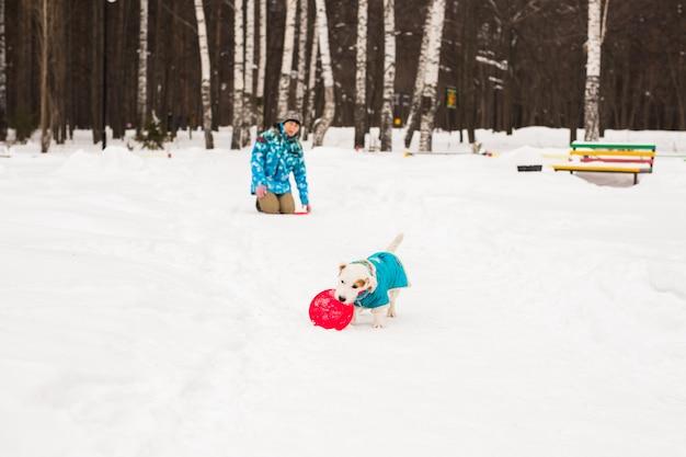 Jack russell terrier. pies gra w winter park.