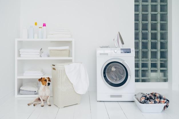Jack russell terrier w łazience z maszyną do zacierania