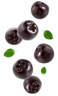 Jagody aronii czarne na białym tle na białej ścianie. całe owoce z liśćmi w powietrzu.