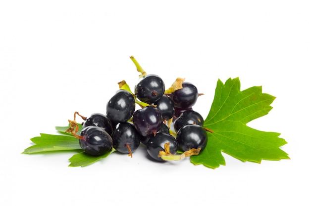 Jagody czarna porzeczka z zielonym liściem. świeże owoce, na białym tle