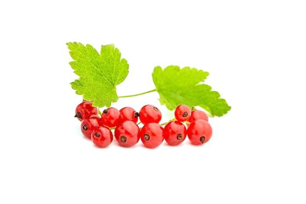 Jagody czerwonej porzeczki ze świeżych zielonych liści na białym tle