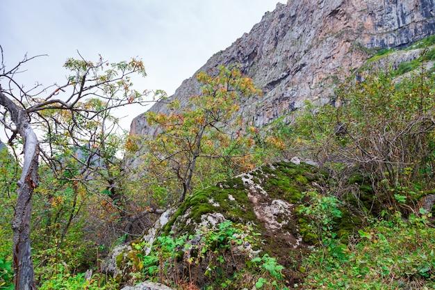 Jagody jarzębiny na tle jesiennych gór
