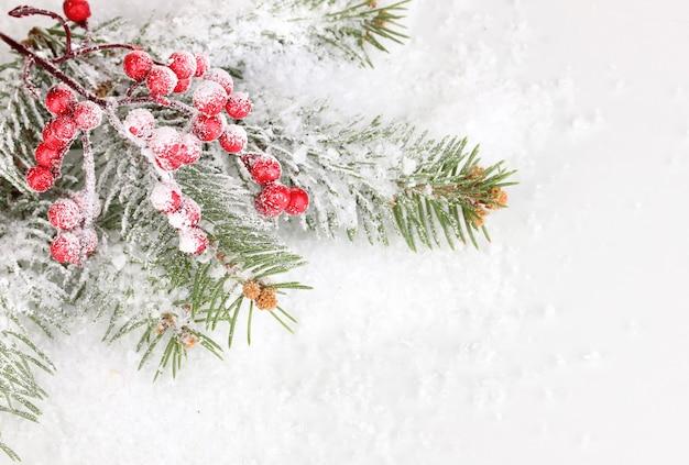 Jagody jarzębiny ze świerkiem pokryte śniegiem w tle