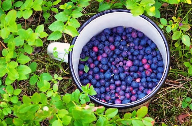 Jagody w filiżance. zbieranie jagód w lesie