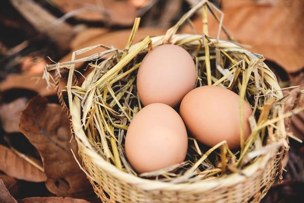 Jaja kurze w koszyku gniazdo z suchych liści jesienią