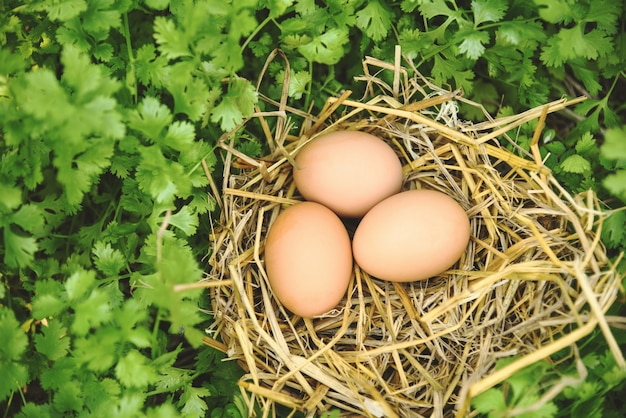 Jaja kurze w koszyku gniazdo z tłem kolendry