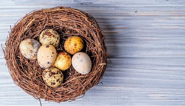 Jaja przepiórcze w gnieździe słomy