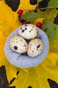 Jaja przepiórcze w gnieździe żółtych liści w gnieździe wełny