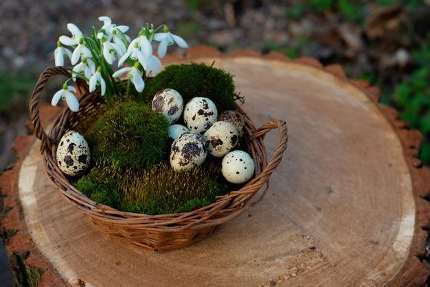 Jaja przepiórcze w koszu na naturalnym zielonym mchu z przebiśniegiem kwiaty na pniu drzewa.