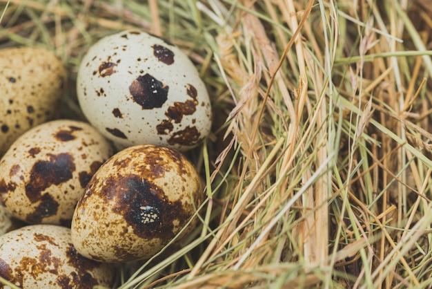 Jaja przepiórcze w sianie
