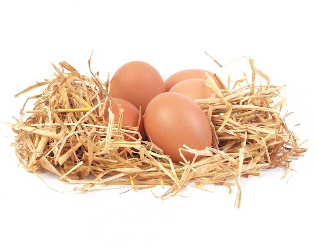 Jaja świeże