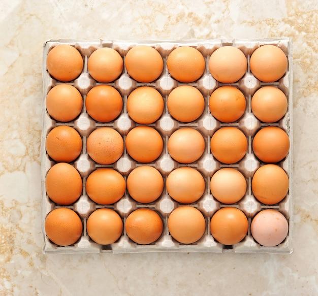 Jajka hodowlane w papierowym pojemniku