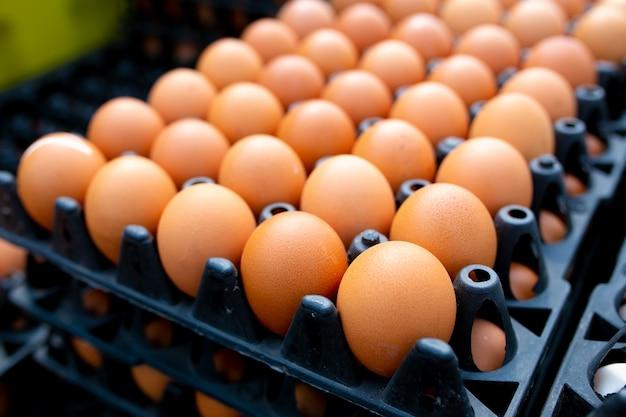 Jajka kurze lub jaja kaczki w czarnym plastikowym pudełku.