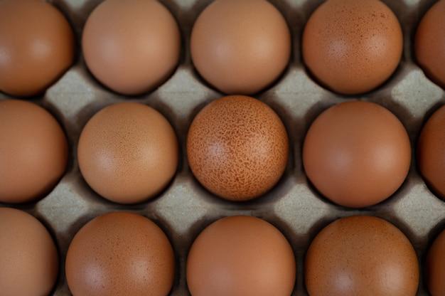 Jajka kurze umieszczone na tacy na jajka. zbliżenie.